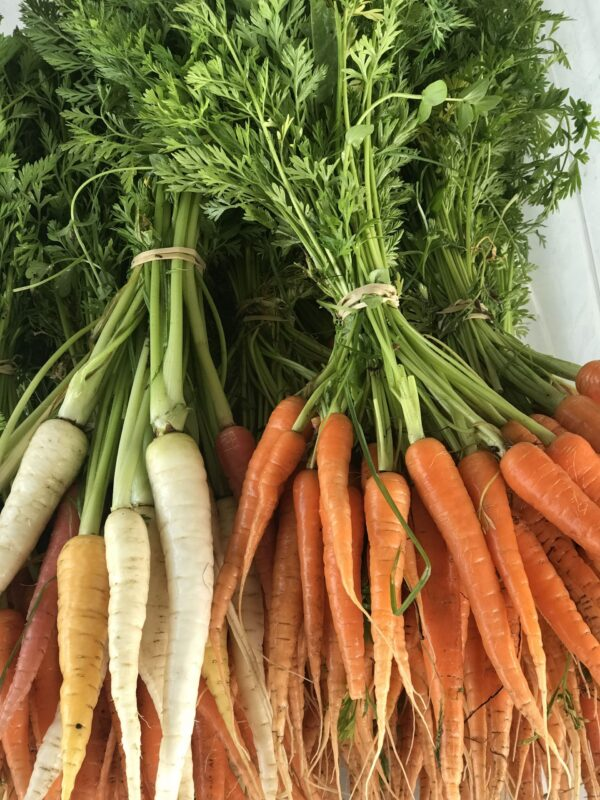 Carrots (Mad looking, multiple tap roots) (small carrots with greens) bunch
